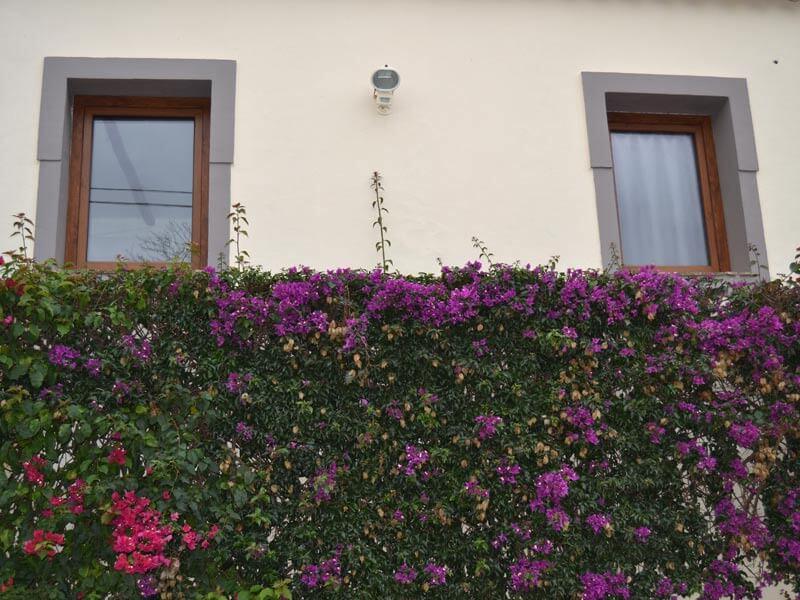 Fenêtres en PVC imitation bois chêne dorée